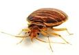 Bed Bug Solutions Cincinnati - Mason, OH