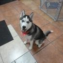 A Shampoochies Dog Grooming And Spa LLC