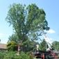 Berra Tree Experts - Burtonsville, MD. 2nd tree
