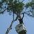 BJ Haines Tree Services