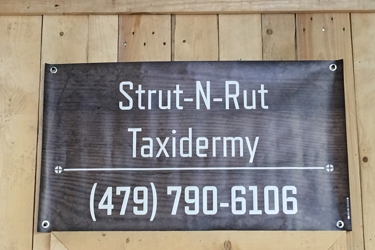 Strut-N-Rut Taxidermy