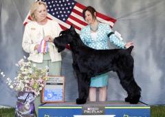 Amina's Mobile Pet Spa - Stafford, VA