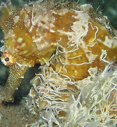 Finatix Scuba Diving - West Palm Beach, FL