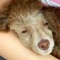 Covey's Pet Grooming - Hayward, CA