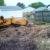 Beaver's Stump Grinding Service