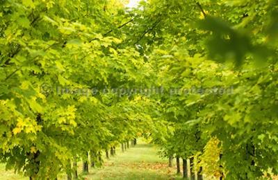 Arbor Tech Tree Experts - Horsham, PA
