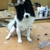 TLC Dog & Cat Grooming - CLOSED