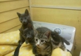 Valley Cat Rescue - Wilkes Barre, PA