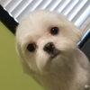 Spa 4 Paws Dog Grooming Salon