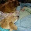 Animal Kindness Veterinary Hospital