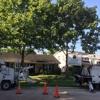 Louisiana Tree Company, LLC.