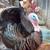 San Juan Animal League