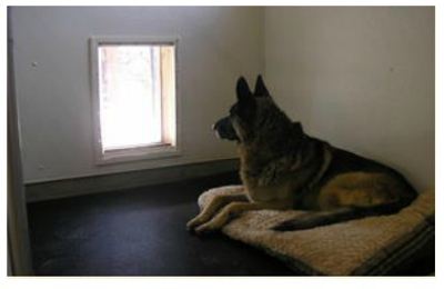 Sittin Dogs - Malaga, WA