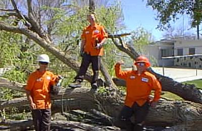 Tip Top Arborists - Lancaster, CA