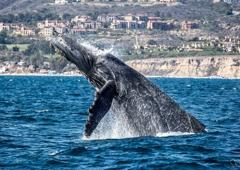 Newport Landing Whale Watching & Specialty Cruises - Newport Beach, CA