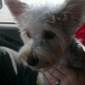 Town And Country Grooming - Odessa, TX