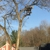 All Seasons Tree Care, Inc.