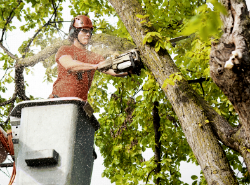 Commercial Tree Service in Asheville