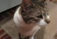 Animal House Calls of North Shore - Peabody, MA