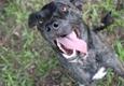 Pet Helpers Adoption Center - Charleston, SC
