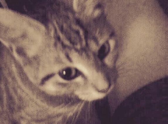 Humane Society of Stark County Animal Shelter - Louisville, OH. Speedy