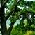 Oak Tree Service