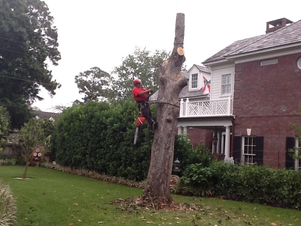 Custom Tree Surgeons 2601 Rolac Rd Jacksonville Fl 32207 Yellowpages Com