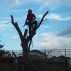 Hook And Ladder Tree Service