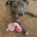 Dogz Best Friendz LLC