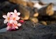 Serenity & Massage - Honolulu, HI