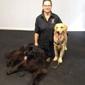 Reward that Puppy Inc. Dog Training - West Henrietta, NY