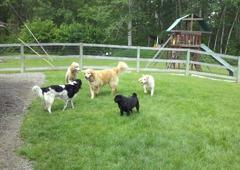 K-9 Camp & Boarding Retreat - Kalispell, MT