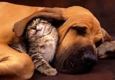 ABQ and Mountains Pet Sitter - Sandia Park, NM