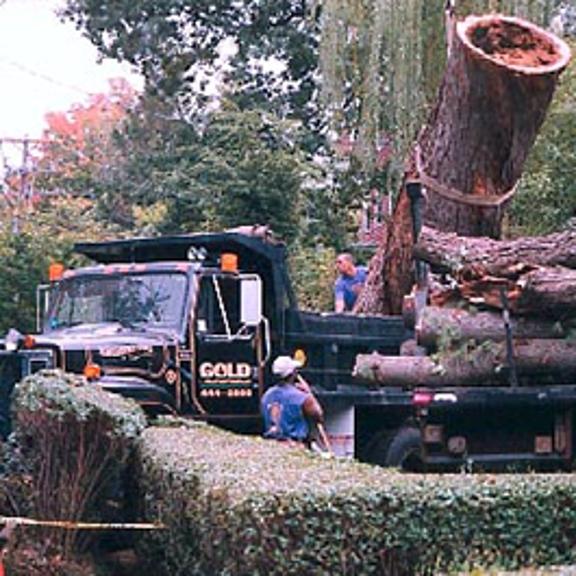 Boston  Tree Company - Needham, MA