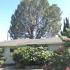 Pine Tree Service inc
