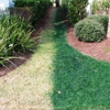 Affordable Grass Painting Service