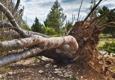 Bottom Dollar Tree Service - Palmer, AK