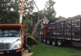 Clearview Tree & Land Corp.