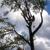 Schwans Tree Care