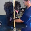 Smart Choice Pet Grooming