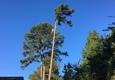 MA Garcia Tree Service - Tyler, TX