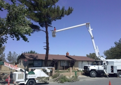 Chads Chippers Tree Service - Lancaster, CA