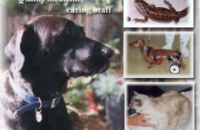 Wildwood Veterinary Hospital - San Jose, CA
