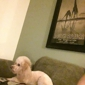 Doggie Do's LLC - Woodbridge, VA. Mason on grooming day