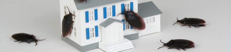 Roach Invasion