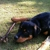 Atlanta Dog Agility