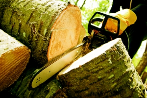 19803 4945 commercial tree care