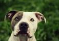 No Bad Dogs - Oakland, TN