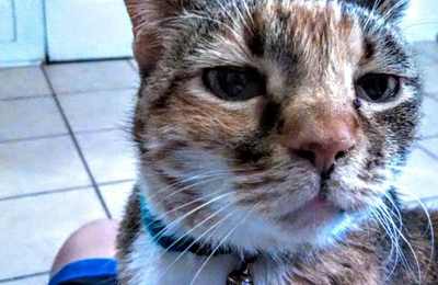 Safe Harbor Animal Hospital - Pensacola, FL. Mary mama cat before Safe Harbor killed her.