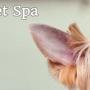 No Regrets Pet Spa